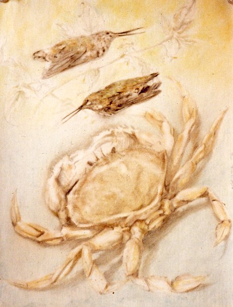 crab and hummingbirds